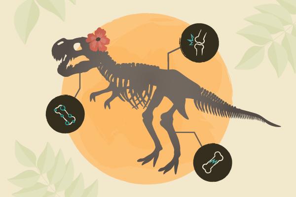 Who is Sue? South Dakota's Biggest Dino Infographic